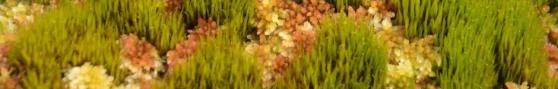 DSC_4868 crop