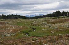 A river through a meadow at the bog edge...