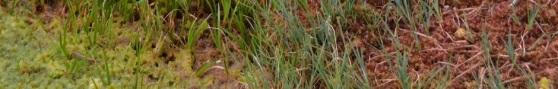 DSC_6170 crop