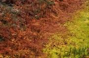Sphagnum moss lawn