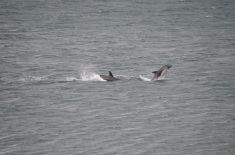 Local dolphins...!